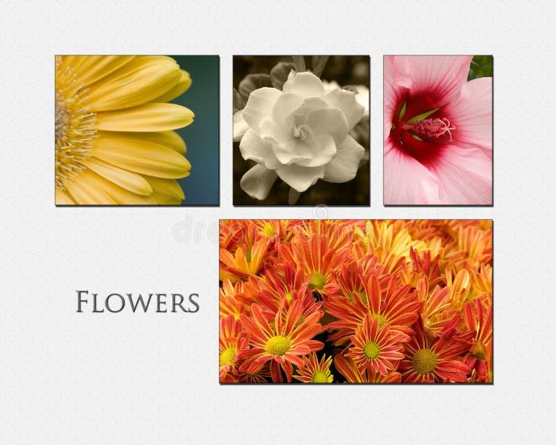 Collage de fleur photos stock