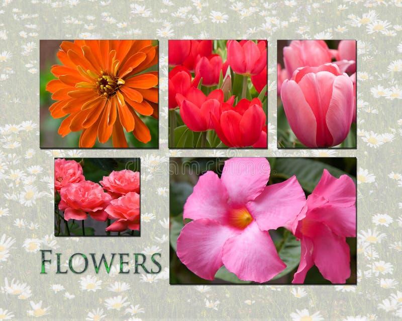 Collage de fleur photographie stock