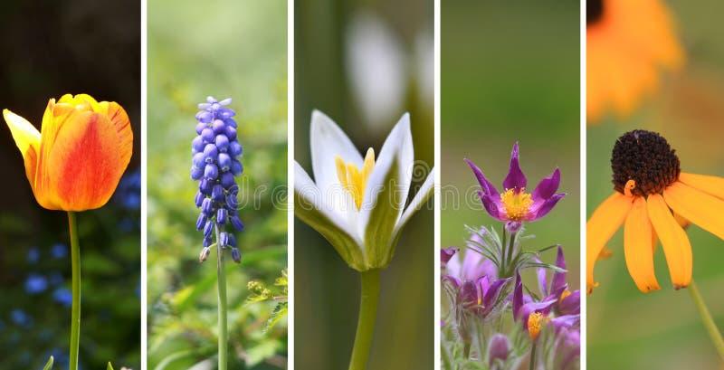 Collage de fleur de ressort photo stock