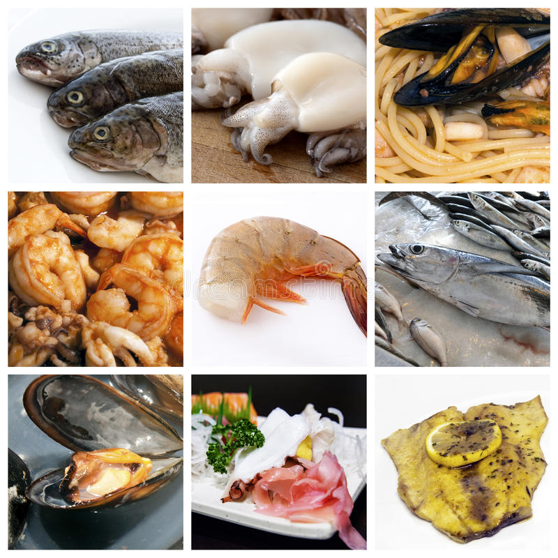 Collage de fruits de mer image libre de droits