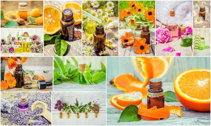 Collage de hierbas y del aceite esencial imagen de archivo libre de regalías