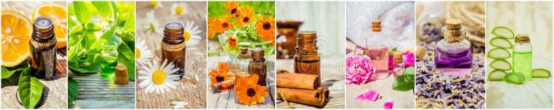 Collage de hierbas y del aceite esencial fotografía de archivo libre de regalías