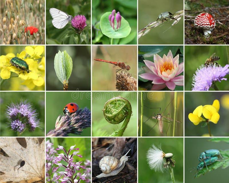 Collage de la biodiversidad imagenes de archivo
