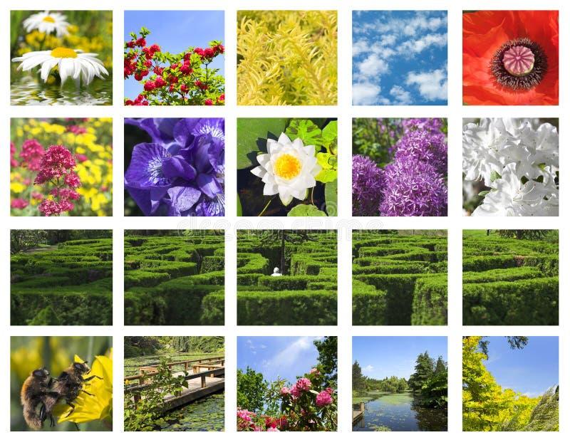 Collage de la flor fotografía de archivo libre de regalías