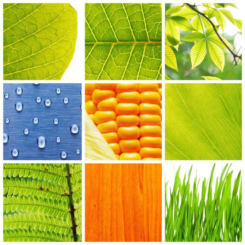 Collage de la naturaleza fotografía de archivo libre de regalías
