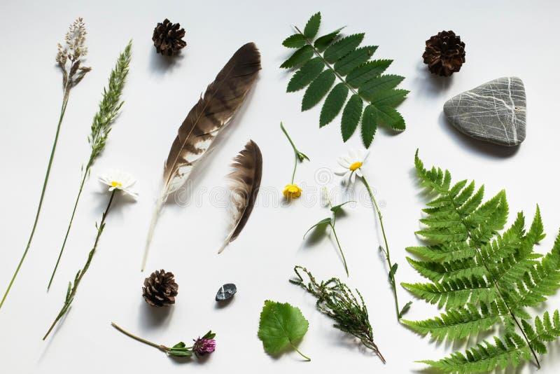 Collage de la naturaleza, artículos de campos y helecho del bosque, trébol, cono del pino, pluma, ranúnculo, brezo, hierba, roca  fotos de archivo