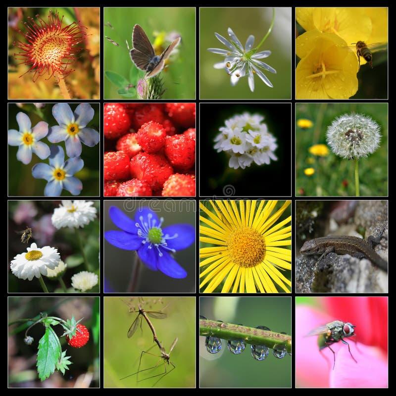 Collage de la naturaleza hecho a partir de 16 imágenes foto de archivo
