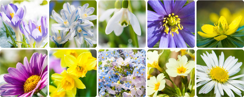 Collage de la primavera fotografía de archivo