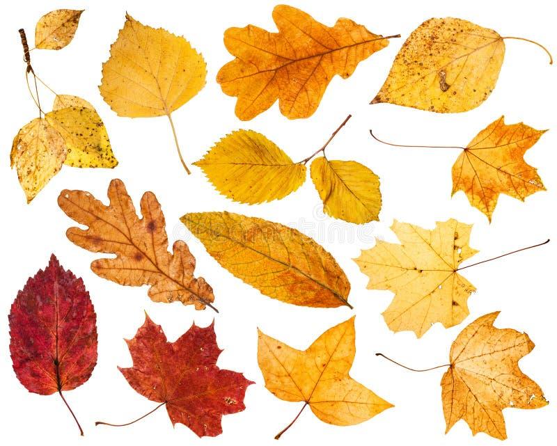 Collage de las diversas hojas de otoño aisladas foto de archivo