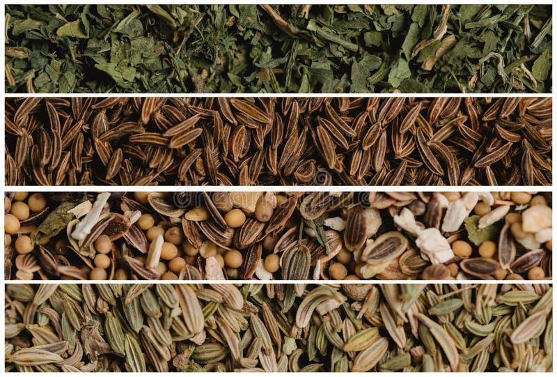 Collage de las diversas semillas de la especia Perejil y comino, sazonando para conservar en vinagre y el hinojo Fotografía macra imágenes de archivo libres de regalías