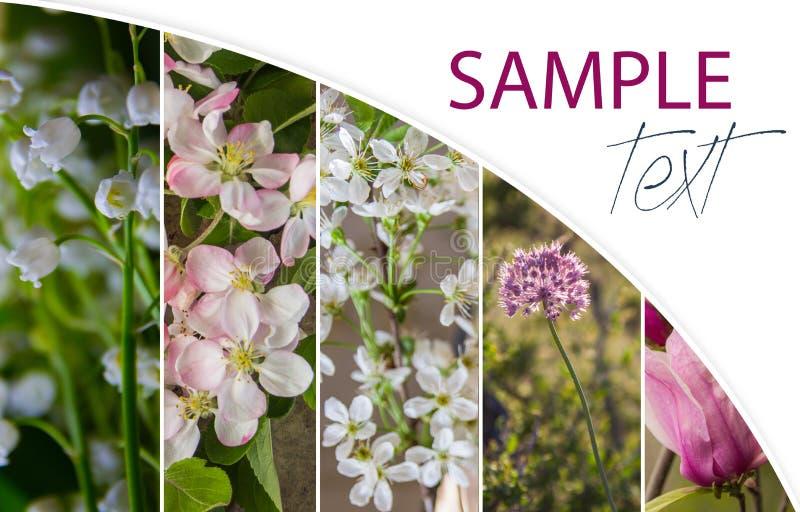 Collage de las flores del flor de la primavera, rosadas y blancas fotos de archivo libres de regalías