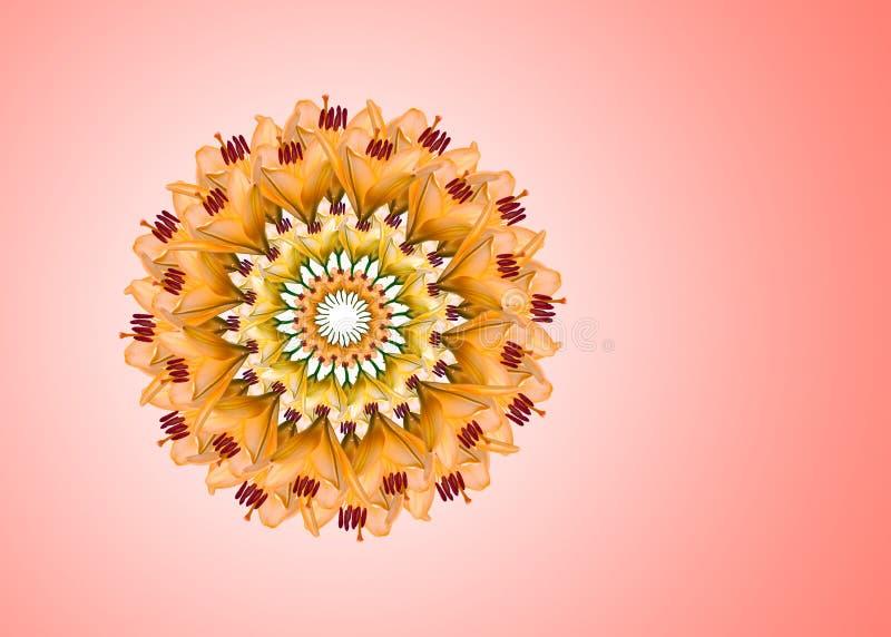 Collage de las flores hermosas anaranjadas del lirio en un fondo rosado con el espacio de la copia imágenes de archivo libres de regalías