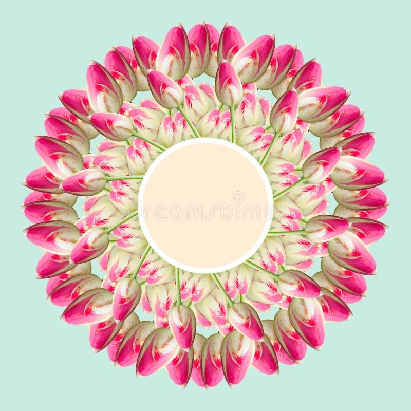 Collage de las flores hermosas rosadas del tulip?n en un fondo azul imagen de archivo