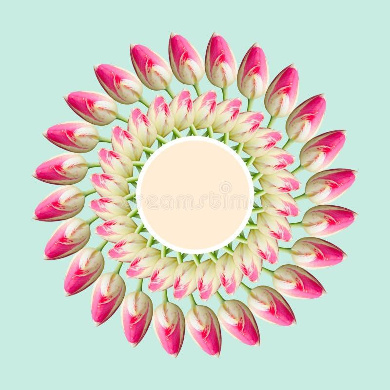Collage de las flores hermosas rosadas del tulipán en un fondo azul con la etiqueta con el espacio vacío de la copia fotos de archivo libres de regalías