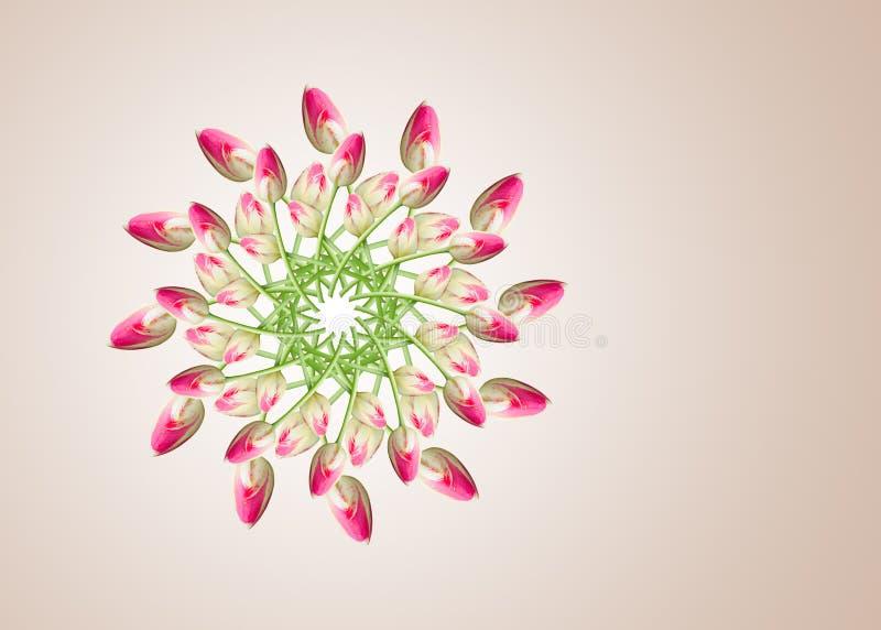 Collage de las flores hermosas rosadas del tulipán en un fondo beige foto de archivo libre de regalías