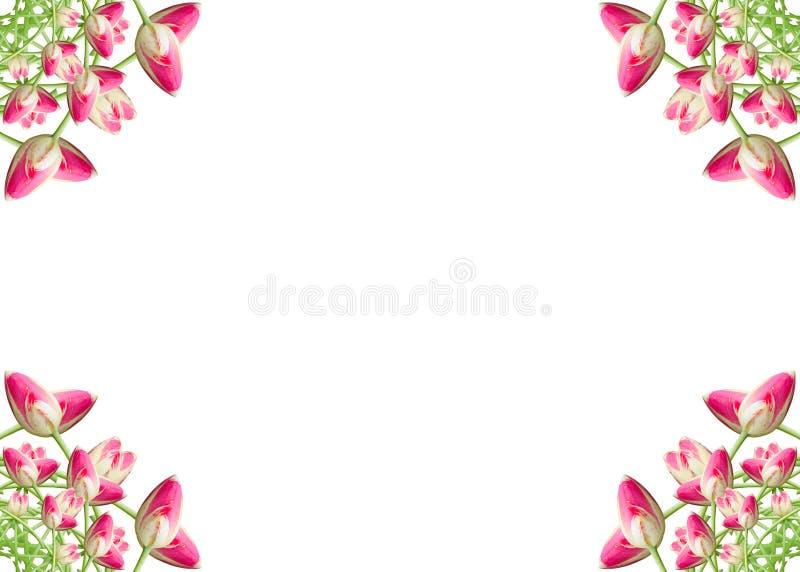 Collage de las flores hermosas rosadas del tulip?n en un fondo blanco con el espacio de la copia fotografía de archivo libre de regalías