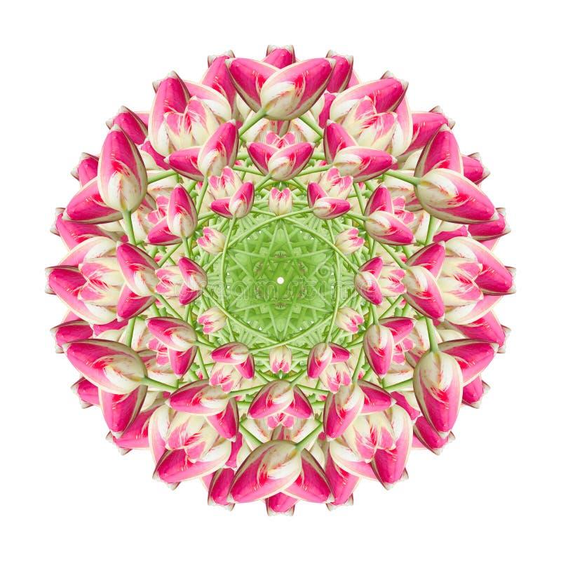 Collage de las flores hermosas rosadas del tulip?n en un fondo blanco fotografía de archivo libre de regalías