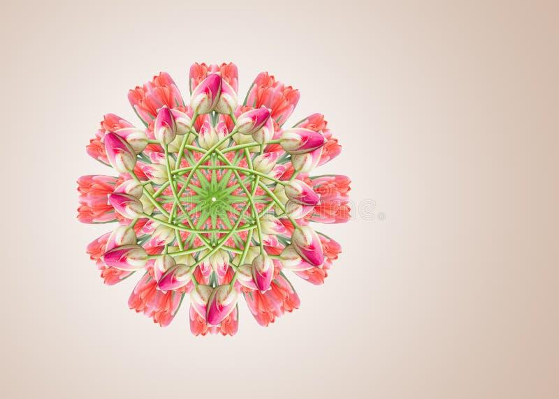 Collage de las flores hermosas rosadas rojas del tulipán en un fondo beige con el espacio de la copia fotografía de archivo