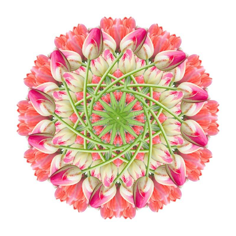 Collage de las flores hermosas rosadas rojas del tulip?n en un fondo blanco fotografía de archivo libre de regalías
