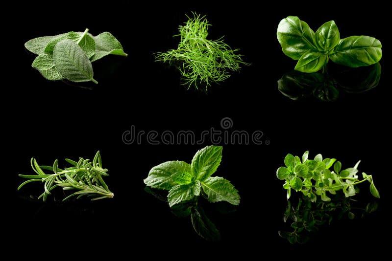 Collage de las hierbas en fondo negro imagen de archivo