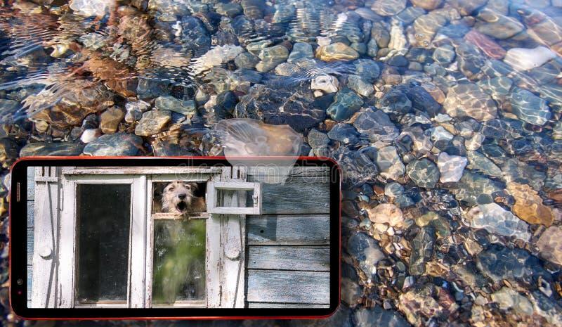 Collage de las medusas soleadas que flotan en agua sobre las piedras del Mar Negro y el teléfono celular que exhibe el perro en l fotografía de archivo