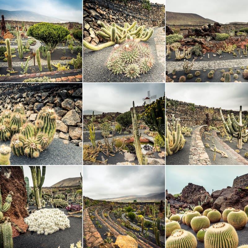 Collage de las opiniones del cactus fotografía de archivo libre de regalías