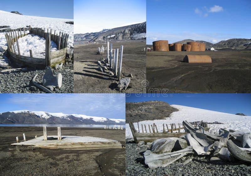 Collage de los huesos y de los barcos la Antártida de la ballena de la caza de ballenas fotos de archivo libres de regalías