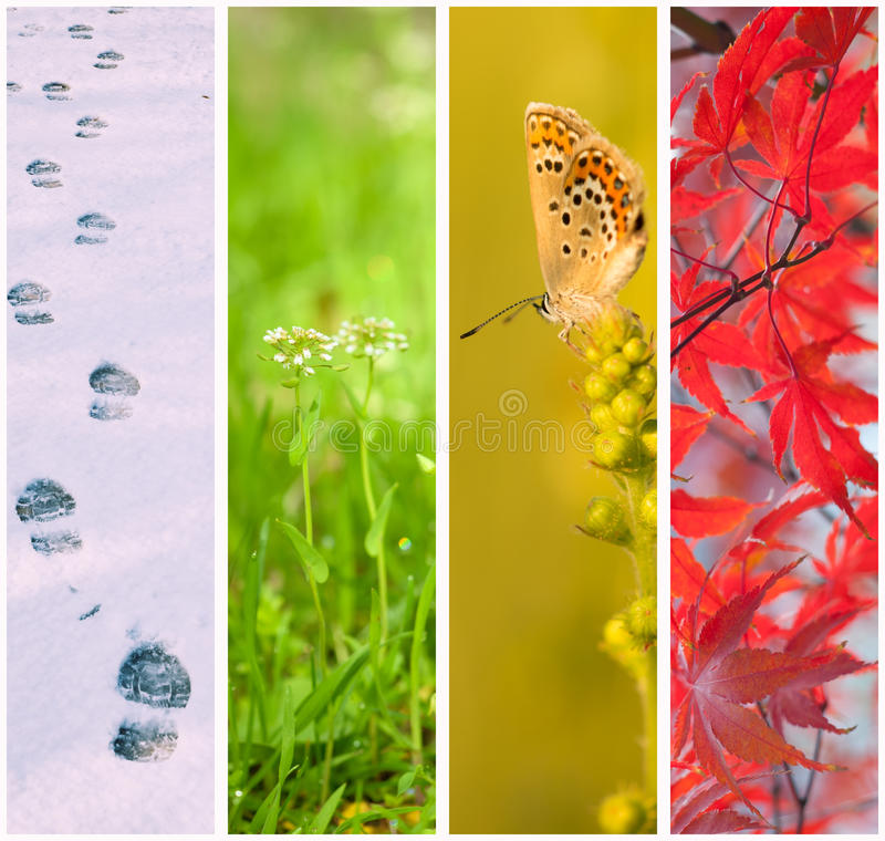 Collage de quatre saisons photo stock