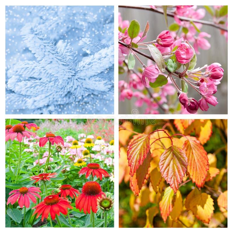 Collage de quatre saisons image stock