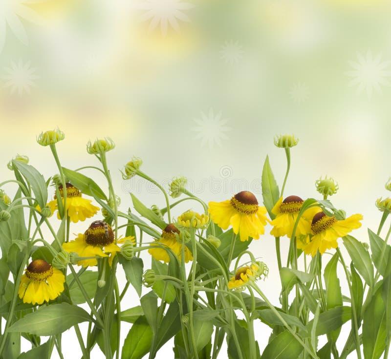 Collage de source avec les fleurs jaunes photographie stock