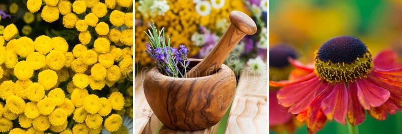 Collage de trois images des plantes médicinales photos stock