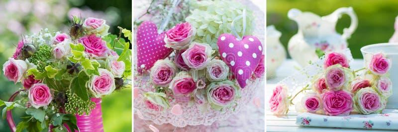 Collage de trois images des roses roses photos stock