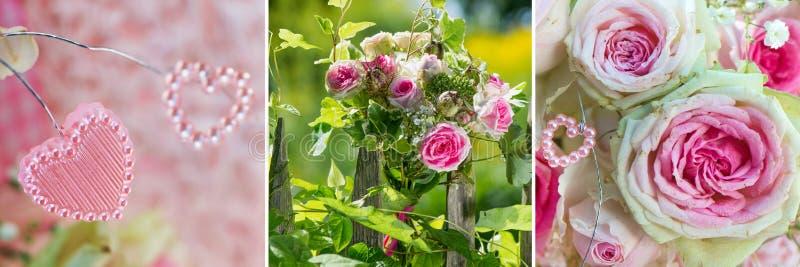 Collage de trois images des roses roses image libre de droits