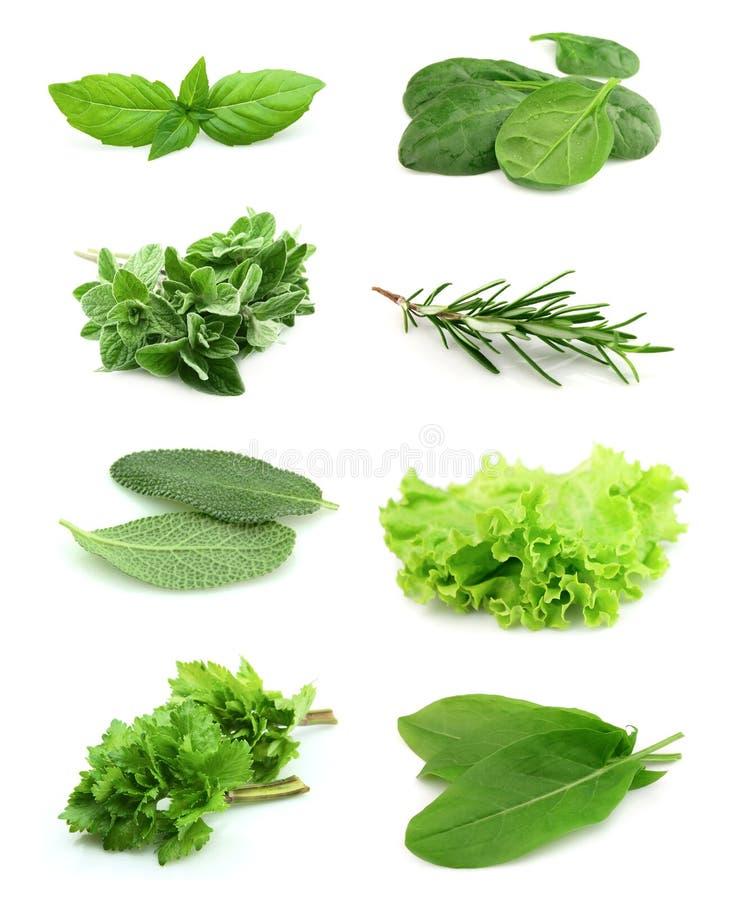 Collage de vert et d'épice de jus images stock