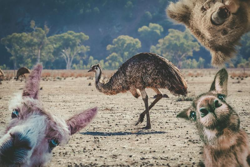 Collage degli animali che vivono in Australia immagine stock