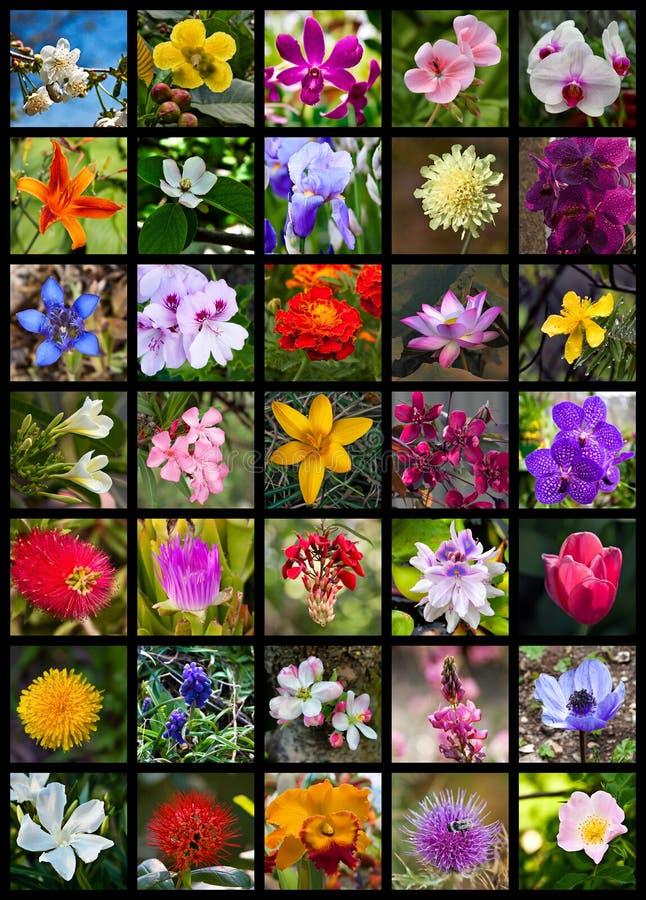 Collage dei fiori fotografie stock