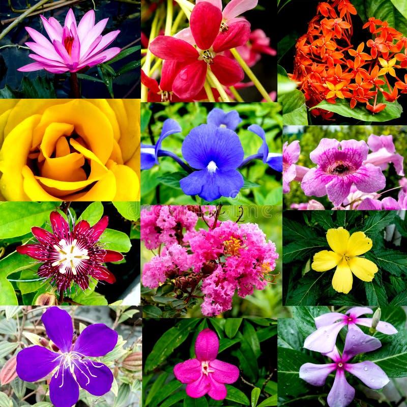 Collage dei fiori immagini stock