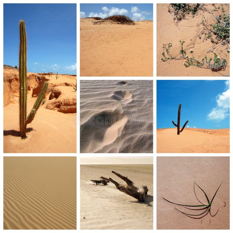 Collage del deserto fotografia stock