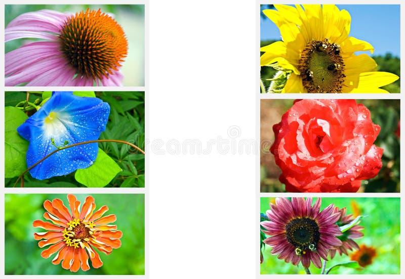 Collage del fiore illustrazione di stock