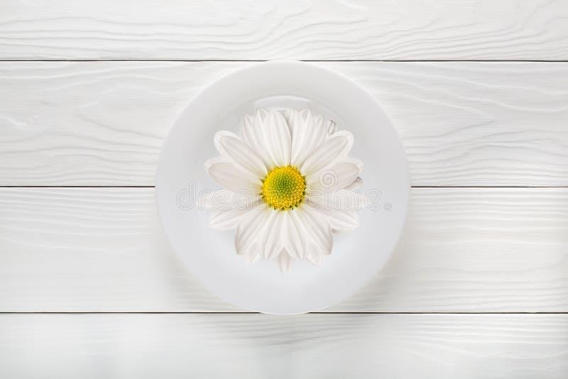 Collage del fiore della margherita fotografie stock libere da diritti