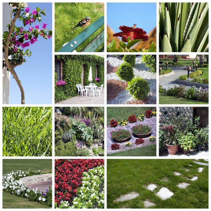 Collage del giardino immagine stock libera da diritti