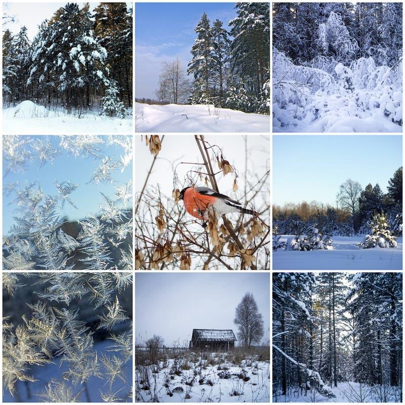 Collage del invierno foto de archivo libre de regalías