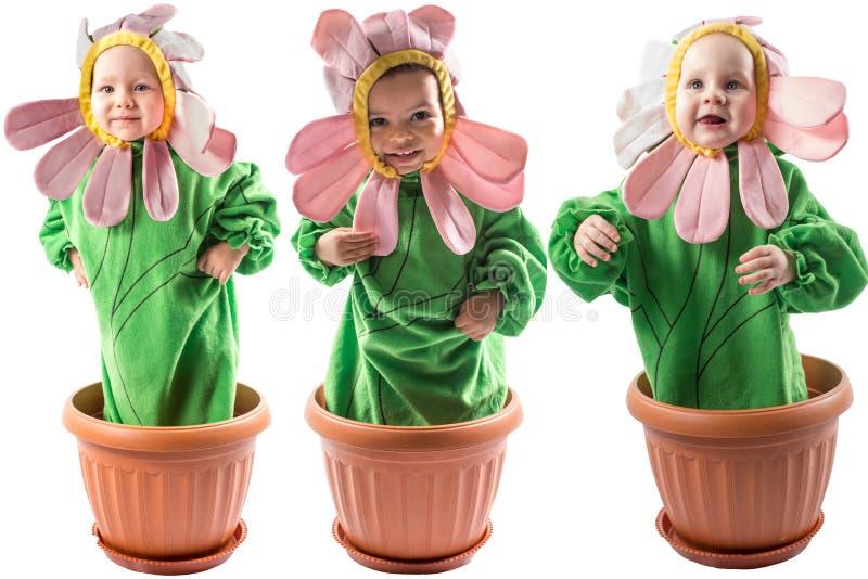 Collage del neonato e della ragazza adorabili, vestito in costume del fiore su fondo bianco immagini stock