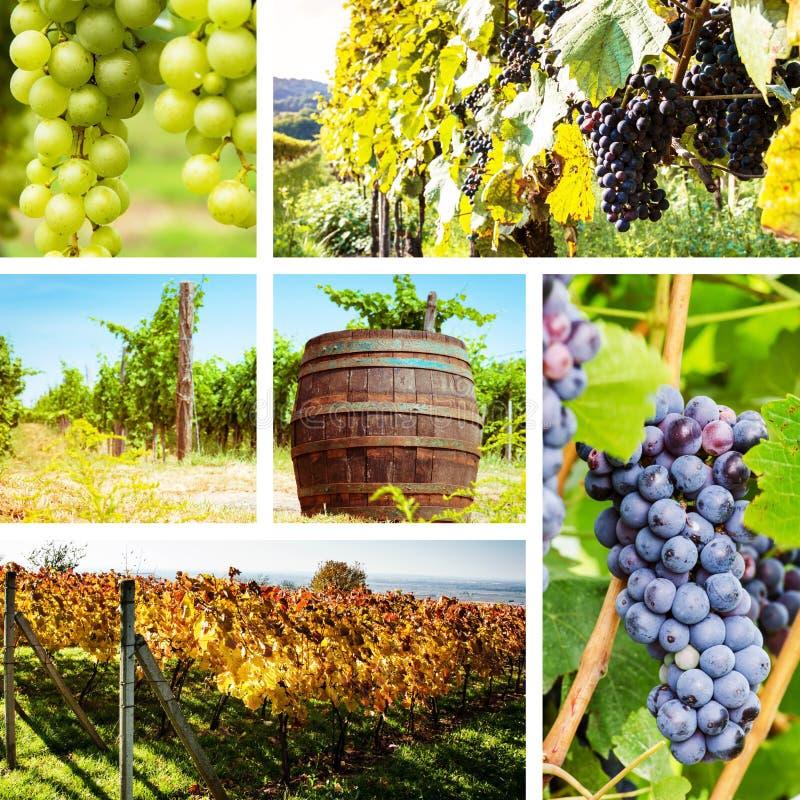 Collage del viñedo y de la uva fotografía de archivo