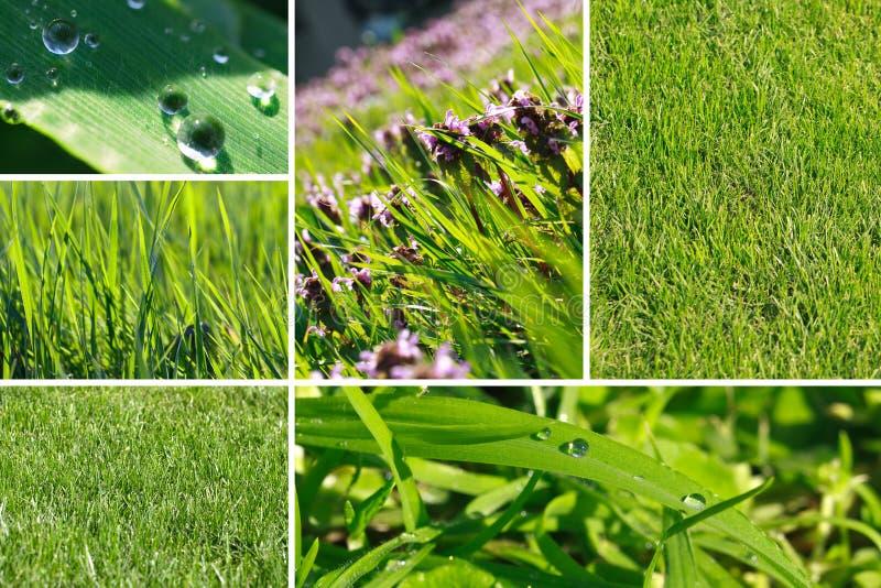 Collage dell'erba verde immagini stock libere da diritti