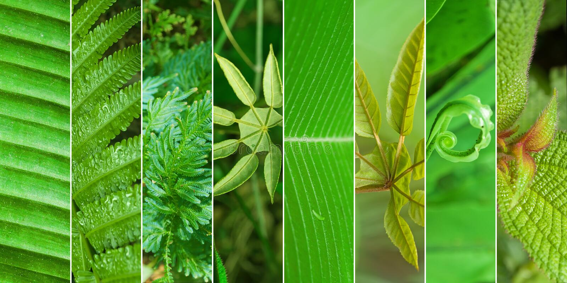 Collage della natura immagini stock
