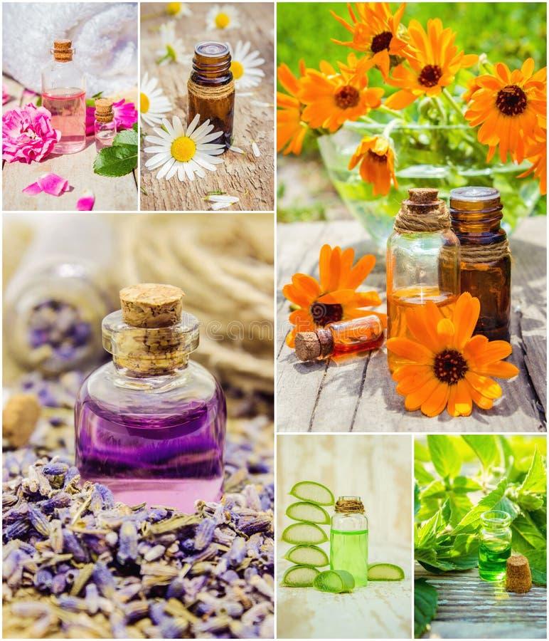Collage delle erbe e dell'olio essenziale fotografia stock