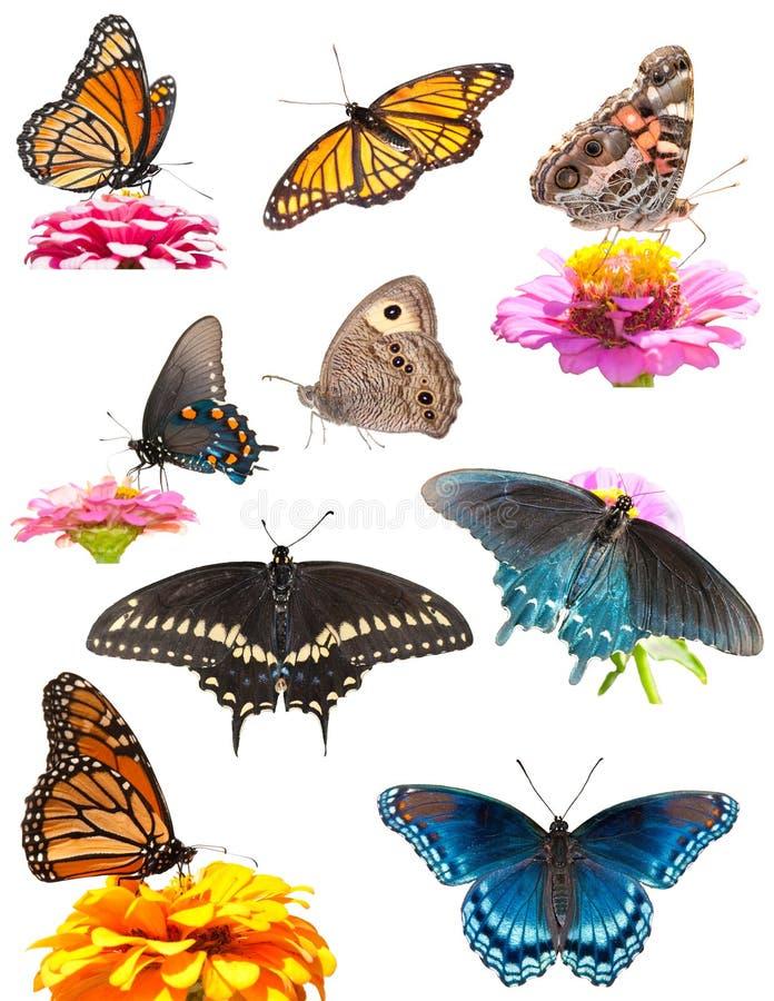 Collage delle farfalle luminose e variopinte immagine stock libera da diritti
