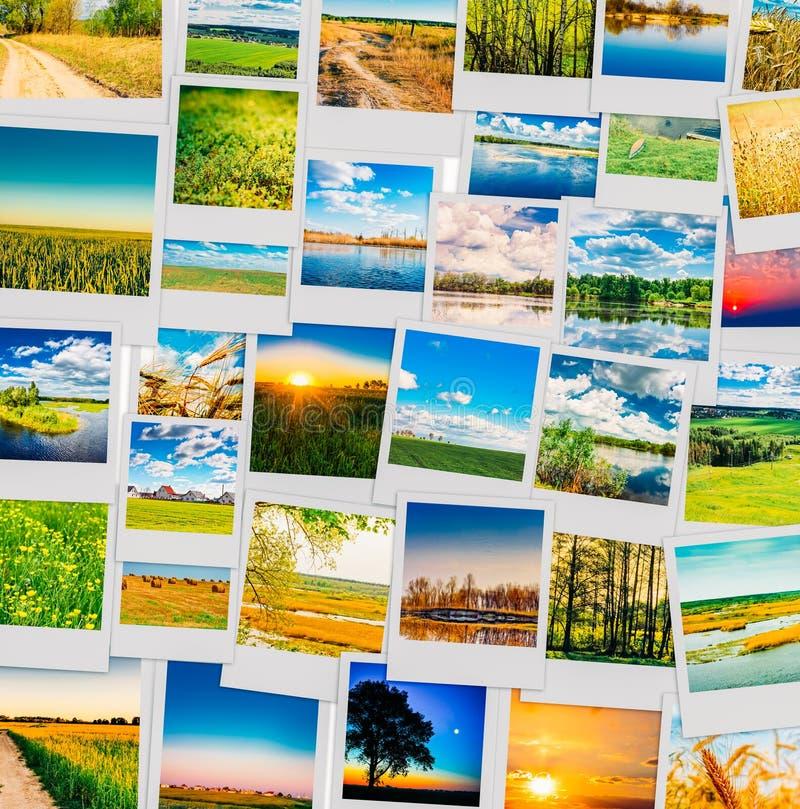 Collage delle fotografie istantanee della natura fotografie stock
