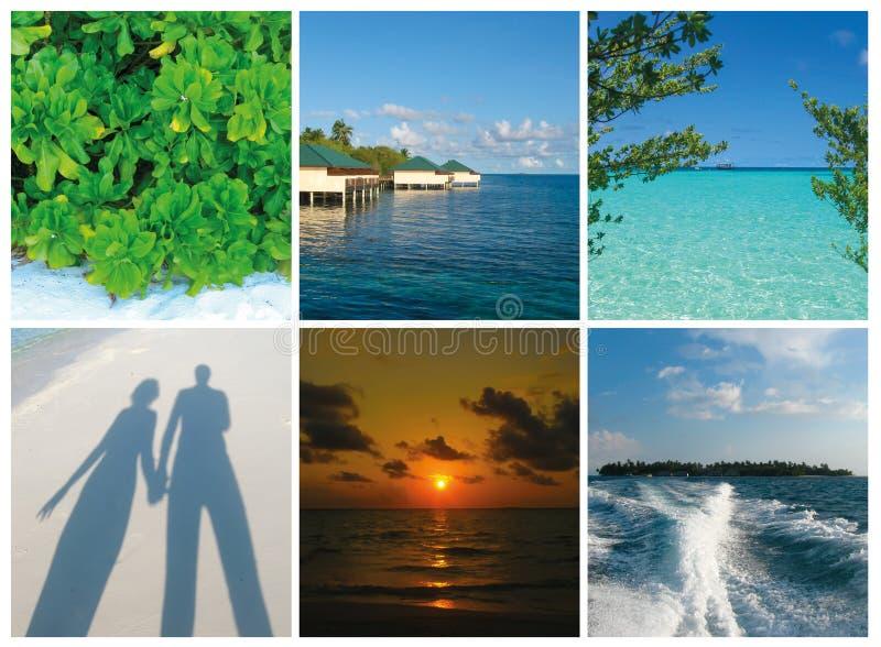Collage delle immagini delle Maldive della spiaggia di estate - fondo di viaggio e della natura fotografia stock libera da diritti